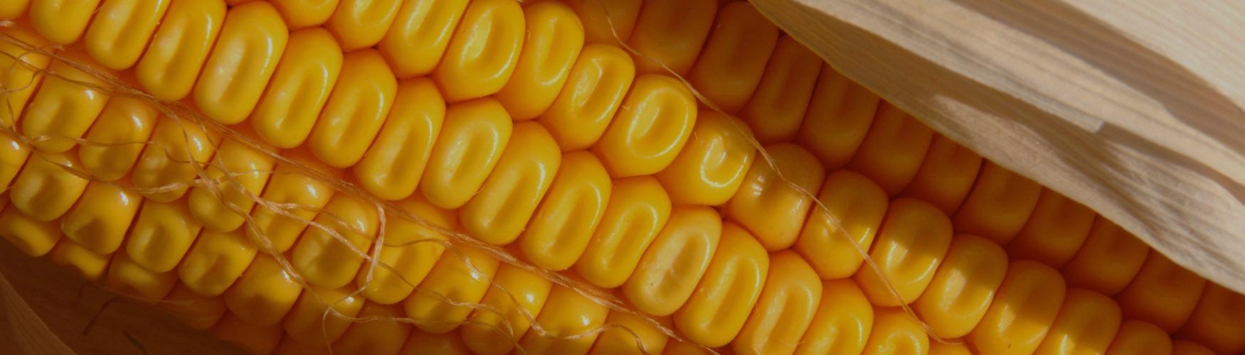 Soluções para a Agricultura